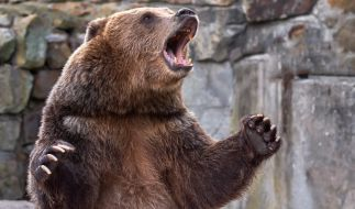 In Sibirien hat ein Bär einen 16 Jahre alten Jungen getötet. (Foto)