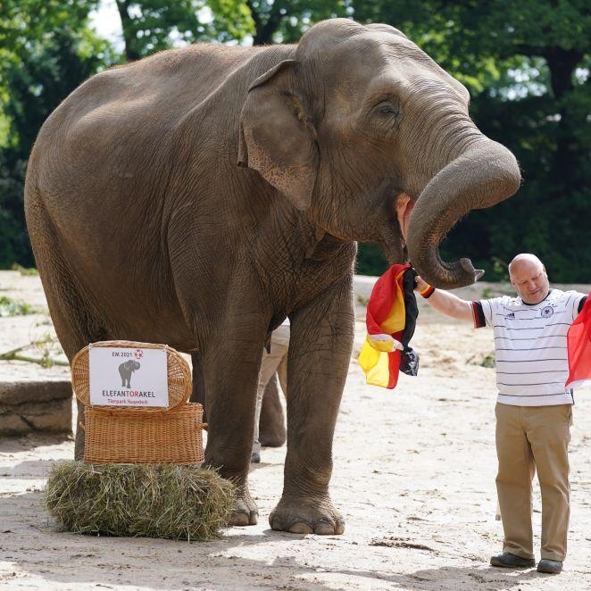 Deutschland-Sieg gegen Ungarn? Das prophezeit das Elefanten-Orakel (Foto)
