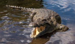 Eine 28-Jährige wurde von einem Krokodil regelrecht zerfleischt. (Foto)