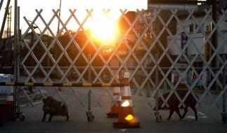 Forscher haben in Fukushima Mutanten-Wildschweine entdeckt. (Foto)