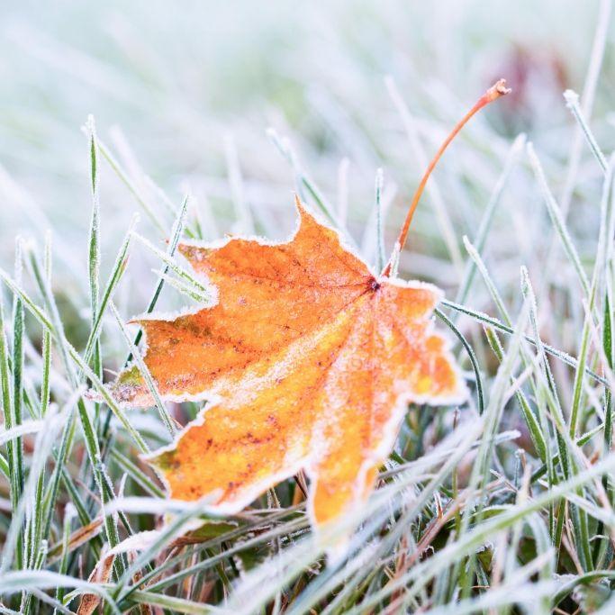 So frostig wird es am Sonntag (Foto)