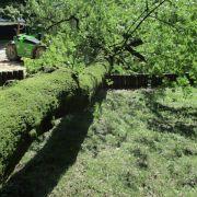 Baum stürzt auf Spielplatz - Mädchen (22 Monate) stirbt (Foto)