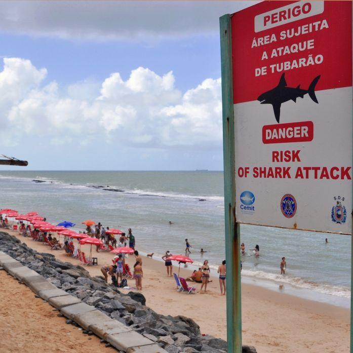 Betrunkener (51) beim Pinkeln von Hai zerfleischt - tot! (Foto)
