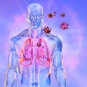 Schock-Studie enthüllt: Jeder 5. Corona-Kranke erleidet Organschäden (Foto)