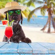 Hitze-Sommer oder Unwetter-Horror: Fallen die Hundstage ins Wasser? (Foto)