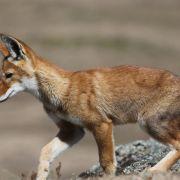 Wiederholung der Tierdoku im TV und online (Foto)