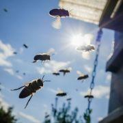 Mann von Bienenschwarm angegriffen - tot! (Foto)