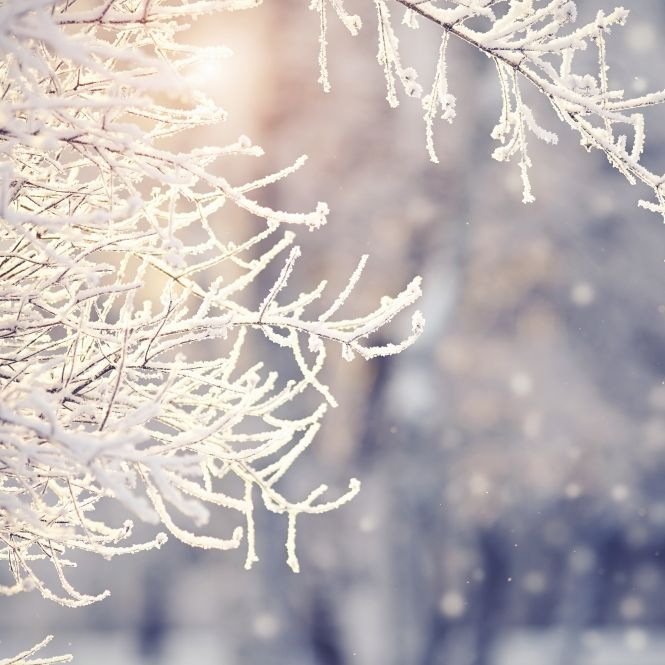 Schnee-Horror im Dezember? Meteorologen wagen erste Prognose (Foto)