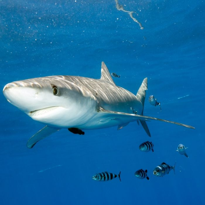 Hai-Alarm am Mittelmeer! Touristen flüchten vor 2-Meter-Bestie (Foto)