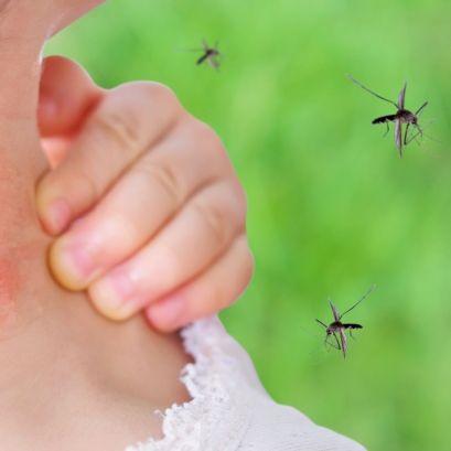 Infektionen drohen! Wie gefährlich sind die Mücken wirklich? (Foto)