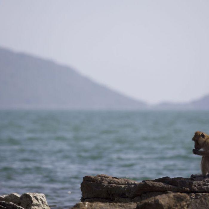 Wiederholung der Wildlifereportage online und im TV (Foto)
