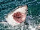 Ein Surfer (16) wurde amNew Smyrna Beach von einem Hai angegriffen. (Foto)