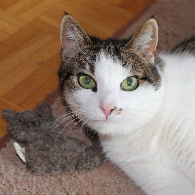 Wie finden Samtpfoten das DHDL-Katzenspielzeug? (Foto)