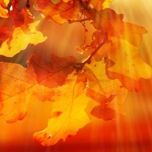 Sahara-Luft kracht den Herbst weg! HIER wird's nochmal richtig heiß (Foto)