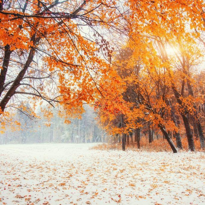 Schnee oder goldener Herbst? Das prophezeit der 100-jährige Kalender (Foto)