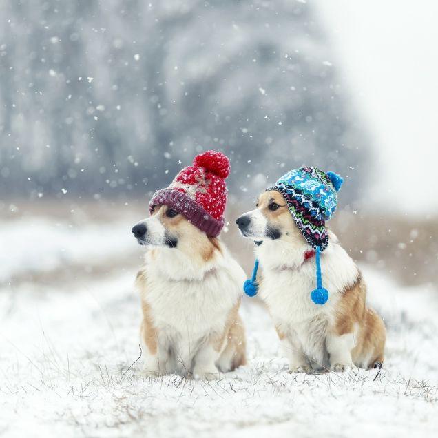 Prognose nach unten korrigiert! Droht uns der kälteste Dezember seit Jahren? (Foto)