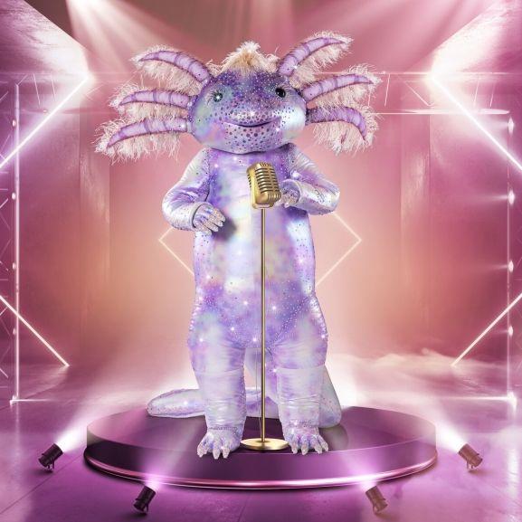 Vom Aquarium auf die TMS-Bühne! Welcher Star ist das Axolotl? (Foto)