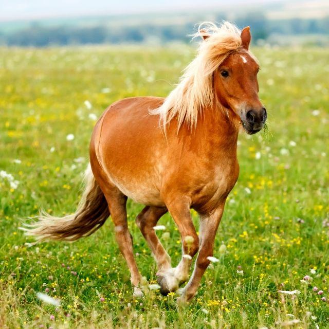 Perverser schändet Pony - Stall-Kamera zeichnet Vergewaltigung auf (Foto)