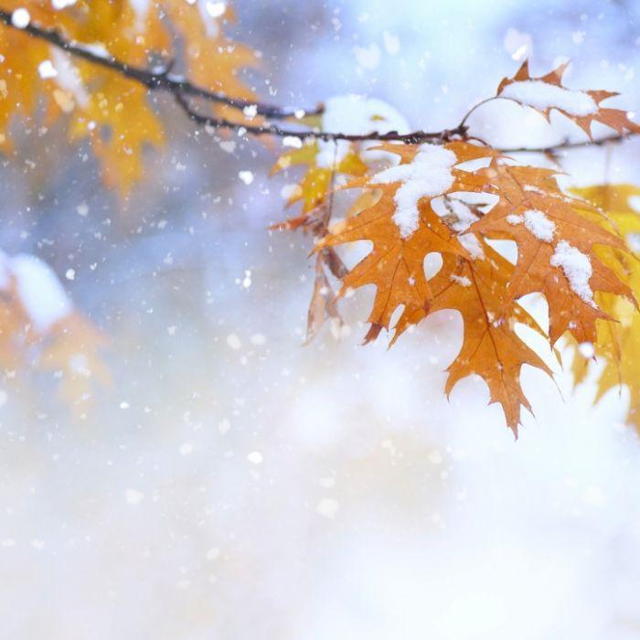 25 Grad, Orkansturm, Schnee! Wetterdienst warnt vor Wintereinbruch (Foto)