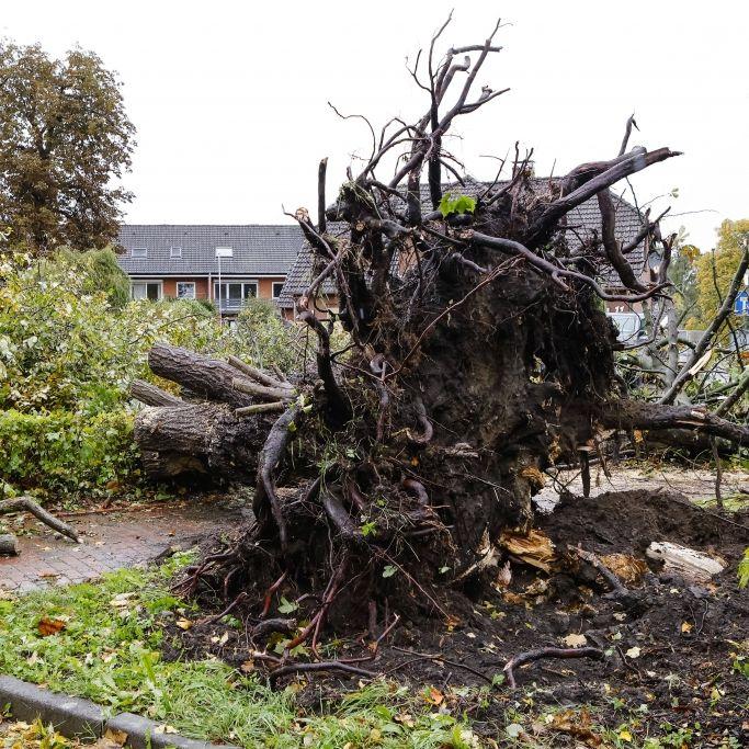 """Wetter-Monster frisst """"Schneise der Verwüstung"""" durch Stadt (Foto)"""