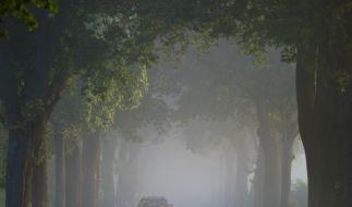 Achtung Autofahrer: Tipps gegen den «Herbstblues» (Foto)
