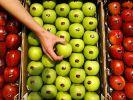 Äpfel (Foto)