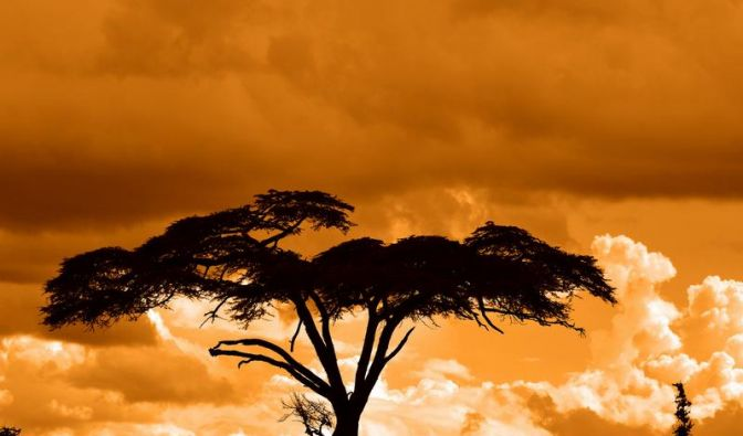 Afrika (Foto)