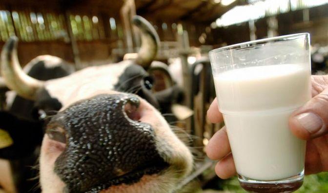 Aigner will Milchbauern helfen (Foto)