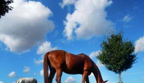 Aldi und Lidl haben Burger mit Pferdefleisch verkauft - ohne es zu deklarieren. (Foto)