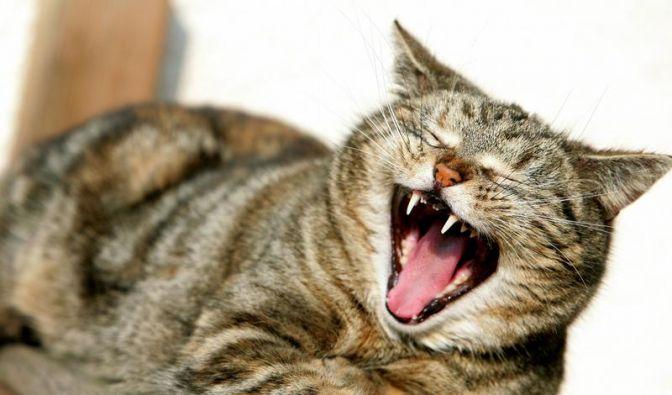 Alte Katzen brauchen mehr Ruhe (Foto)