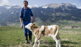 Andras Knutti ist mit seiner sechsbeinigen Lilli jetzt ein Medienstar. (Foto)