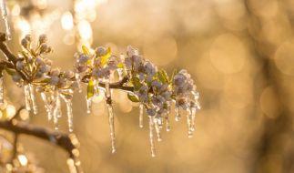 April-Wetter sorgt nach der ersten Frühlingsblüte für frostige Temperaturen. (Foto)