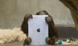 Auch Orang-Utans lieben das iPad. (Foto)