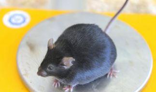 Auch Tiere werden immer dicker (Foto)