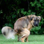 Auf dem Fußboden, in Plastiktüten, Eimern und Badewannen - überall in der Wohnung war Hundekot verteilt. (Foto)