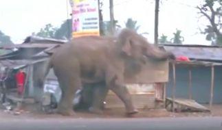 Elefanten-Attacke in Indien