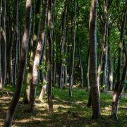 Rachlüstige Frauen setzen nackten Ex im Wald aus (Foto)