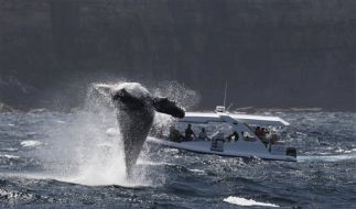 Australia Whale Watching (Foto)