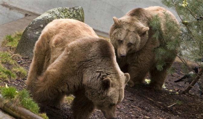 Bären (Foto)