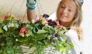 Balkonbepflanzung (Foto)