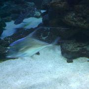 Im Alltagstest zeigt sich die Auslöseverzögerung des Base Lutea 2: Der Fisch war schneller als das Smartphone das Bild aufnehmen konnte.