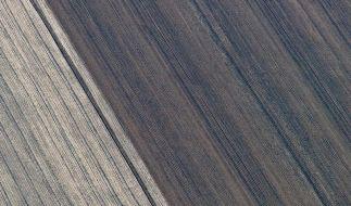 Bauern suchen Nachwuchs - Mangel befürchtet (Foto)