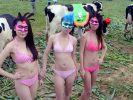 Beautycontest für Kühe (Foto)