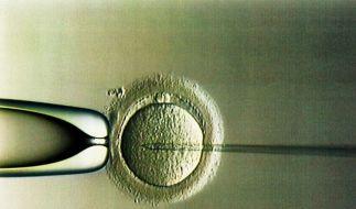 Befruchtung (Foto)