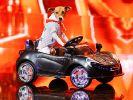 """Bei """"Das Supertalent 2017"""" möchte auch Hund Pepsi sein Können unter Beweis stellen. (Foto)"""