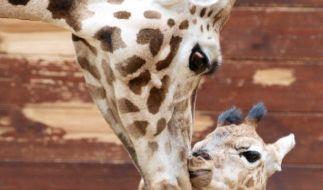 Bei Tieren ist die Mutterrolle klar definiert, Menschen haben da mehr Spielraum. (Foto)