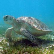 Beim Tauchen müssen sich Paare ohne Worte verstehen und erleben die faszinierende Unterwasserwelt.