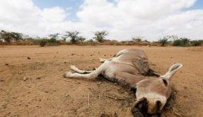 Bericht: Klimawandel führt zu Extremwetter und Armut (Foto)