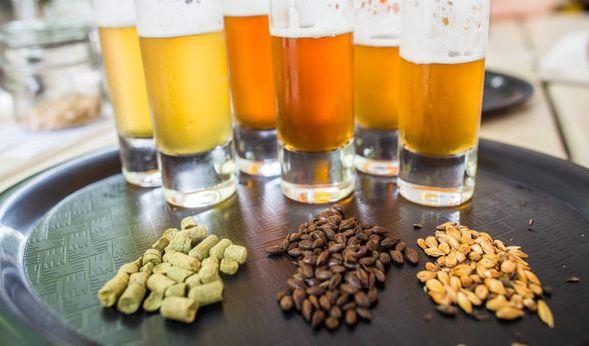 Bier verkosten und dafür bezahlt werden? Die Bierothek macht's möglich. (Foto)