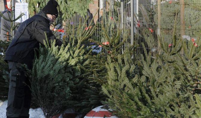 Bio-Weihnachtsbäume tragen Siegel (Foto)